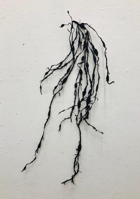 b kelp