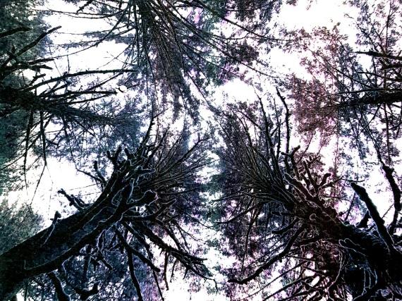 Treeflow2