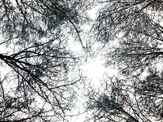 Treeflow3