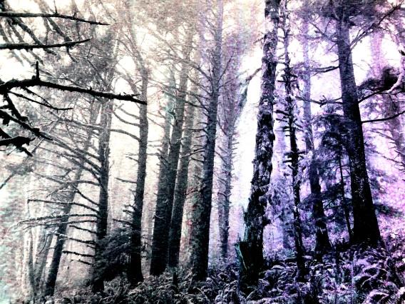Treeflow4