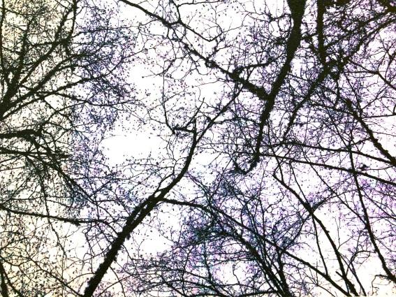 Treesflow1