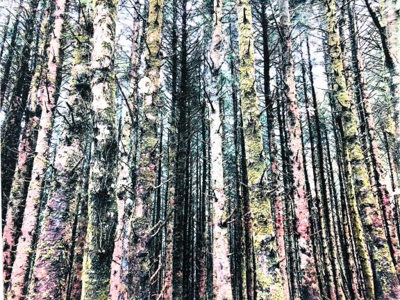 Treesflowjpeg